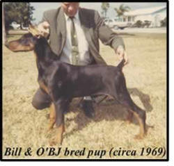 BILL ANDREWS & HIS DOBERMAN PUPPY