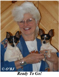 Champion Toy Fox Terriers Fannie Mae and Garbo