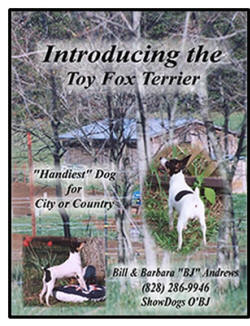 "O'BJ TOY FOX TERRIERS IN NORTH CAROLINA, ""MADE IN THE USA"""