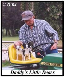 Bill's Little Dears - Before Toy Fox Terriers