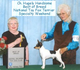 NATIONAL TOY FOX TERRIER WINNER, CH. HUGELY