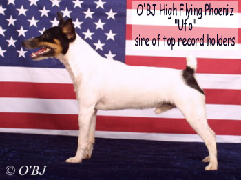 "Toy Fox Terrier, O'BJ High Flying Phoeniz ""UFO"", sire of top record holders"