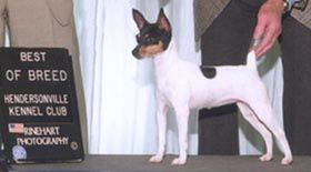 "TOY FOX TERRIER CH. ""ZONA"", HUGELY'S MOTHER"